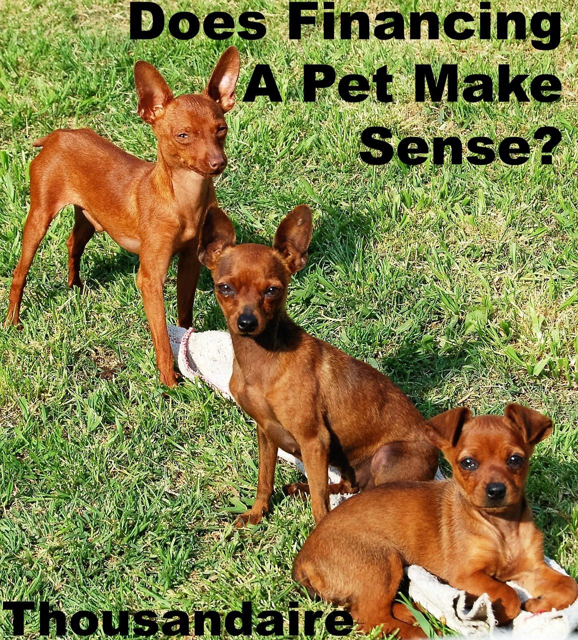 Does Financing A Pet Make Sense-