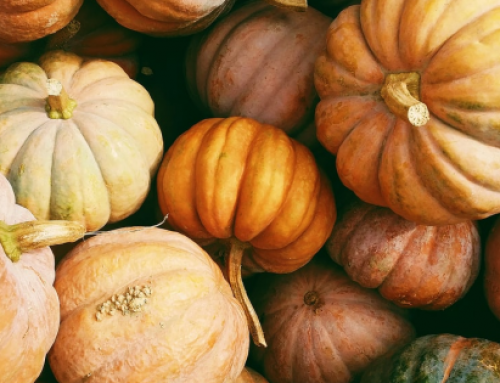 5 Fun Fall Activities that Won't Break Your Budget in 2020